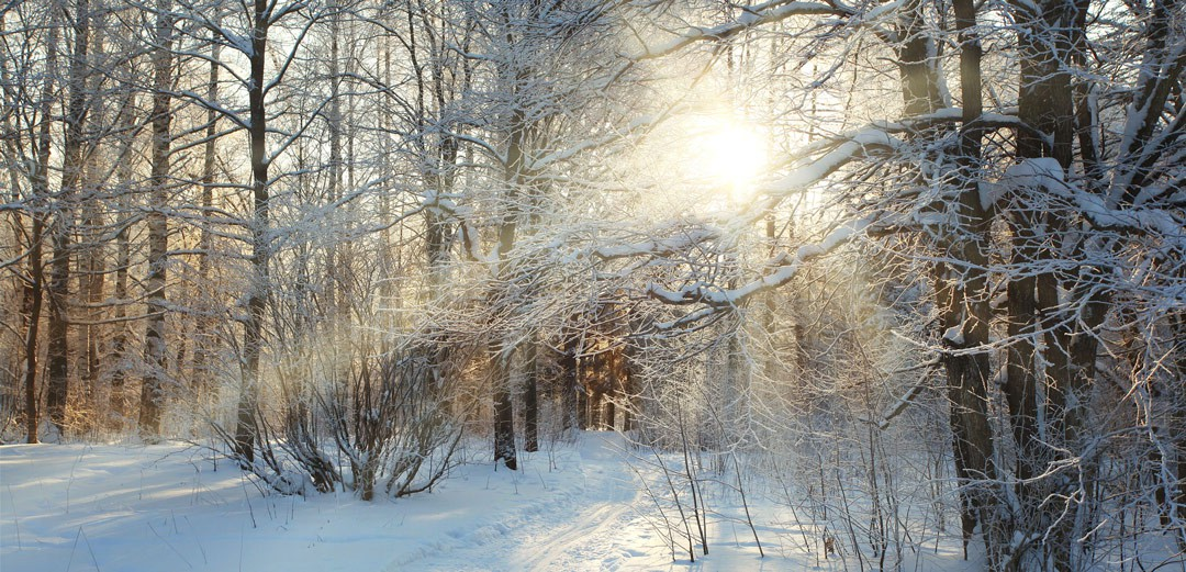APFP-DMV Winter Update